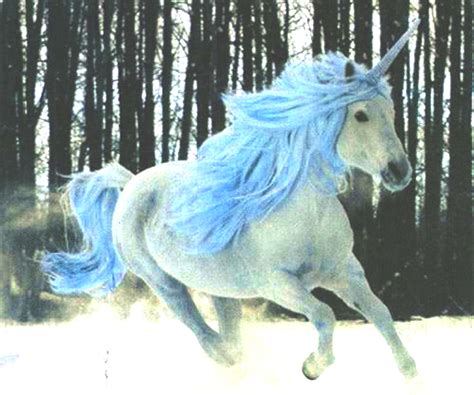 imagenes de unicornios locos loco pero no estupido unicornio azul