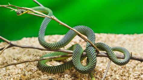 animale da appartamento serpenti da appartamento quali scegliere io e il mio