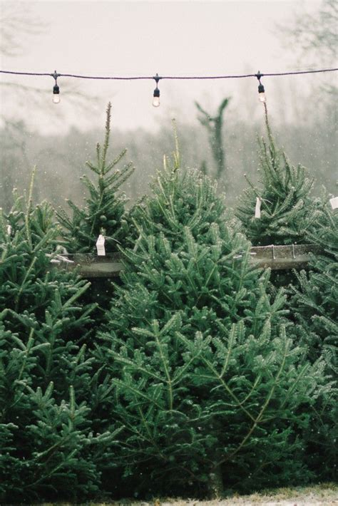 best christmas tree farms oregon best 25 tree farms ideas on tree shops tree and diy