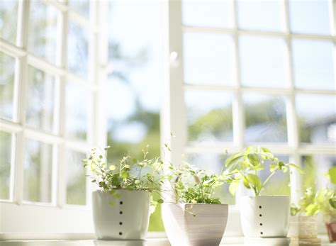 window gardening container gardening tips arcadia farms