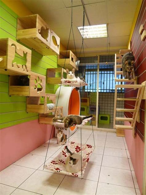 play rooms for 25 best ideas about cat play rooms on cat
