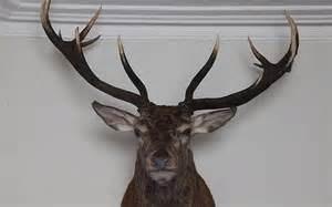 Real Deer Head Wall Mount Emperor Of Exmoor S Head Found Mounted On Hotel Wall