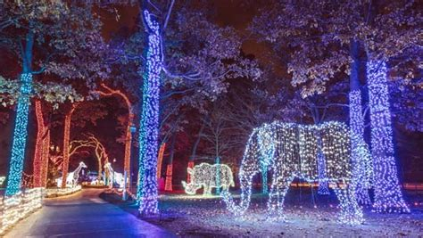 detroit zoo lights detroit zoo lights tickets contest oakland county