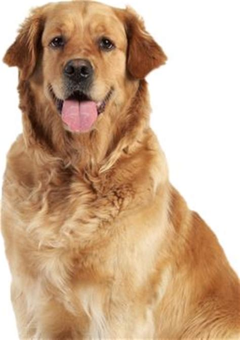 are dogs mammals related keywords suggestions for mammals dogs