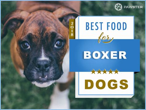 best puppy food for boxers top 6 best recommended foods for a boxer