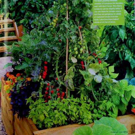 Tomato Planter Boxes by Tomato Herb Planter Box S P A C E S P L A C E S