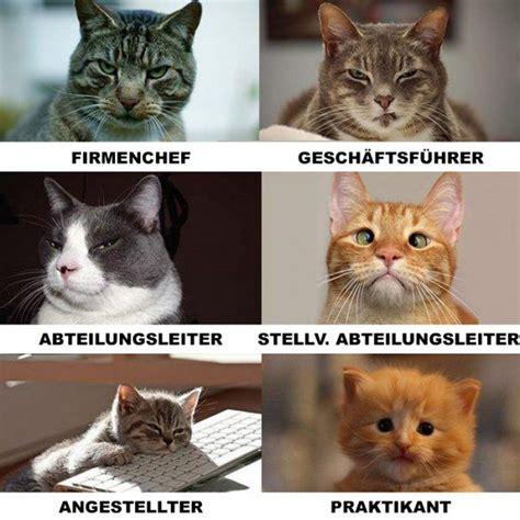 Katzen Meme - die besten 17 ideen zu lustige tierbilder auf pinterest