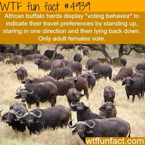 7 Strange And Wonderful Animal Facts by Facts Interesting Facts Amazing