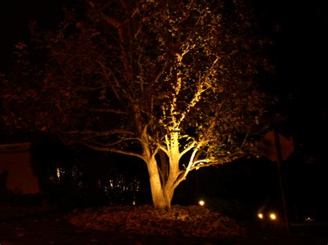 Landscape Tree Lighting Landscape Lighting Wildrose Gardening
