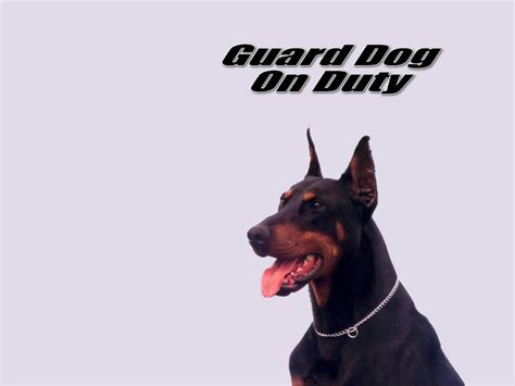 how to a guard puppy dogs images guard on duty hd wallpaper and background photos 13986125
