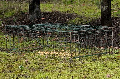 come costruire una gabbia trappola per uccelli trappole e tagliole forum natura mediterraneo forum