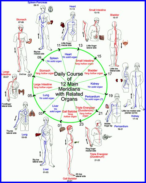 Meridian Detox by Complementary And Alternative Medicine Methods In