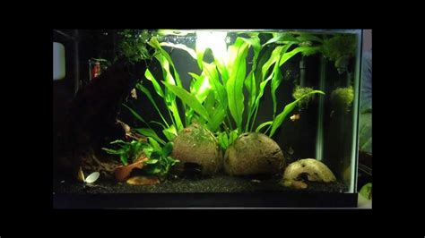 best low light aquarium plants image gallery low light aquarium plants