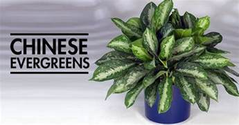 house plants that don t need light 12 aesthetic plants that don t require sunlight and can beautify your house