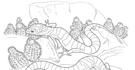 desert animals coloring pages coloringsuite com