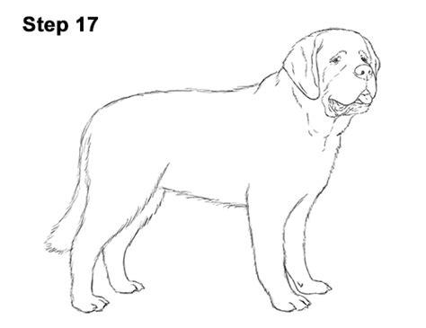 how to a st bernard how to draw a st bernard