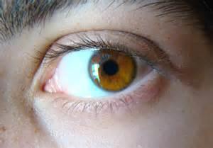 brown eye color file light brown eye jpg wikimedia commons