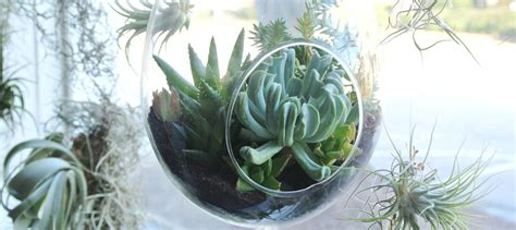 low light succulents 100 low light succulents succulents u2014 kiwi gardens diy floating window shelves design