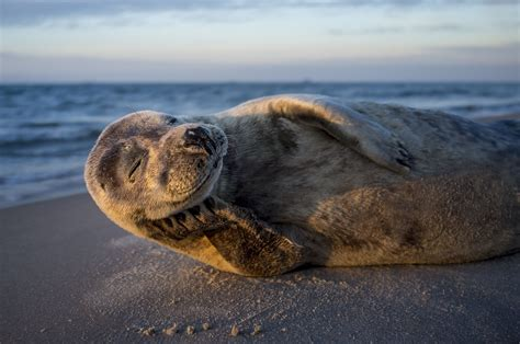 national geographic new year seal image national geographic your photo