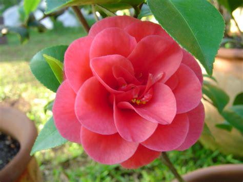 imagenes de flores naturales gratis las flores mas hermosas del mundo imagenes imagui