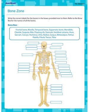 Science Worksheets For 5th Grade by Bone Zone Printable Human Anatomy Worksheet For 5th