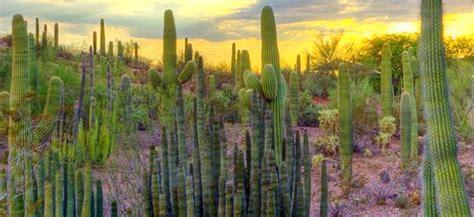 Desert Botanical Garden Admission Free Admission Desert Botanical Garden Desert Botanical Garden Free Admission On Tuesday
