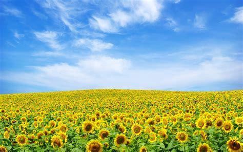 Landscape Pictures With Flowers Flowers Landscape Wallpaper 1920x1200 78244