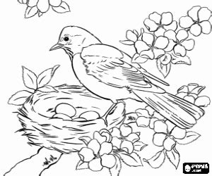 birds coloring pages printable games