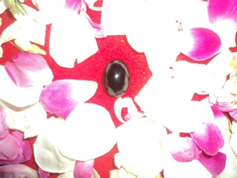 Mustika Macan Aura Merah kedai mustika pusaka bertuah foto gambar mustika keris