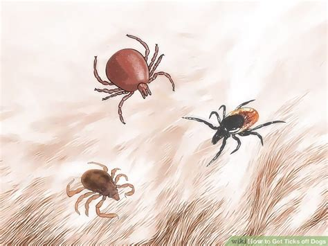 how do dogs get ticks how to get ticks dogs with pictures wikihow