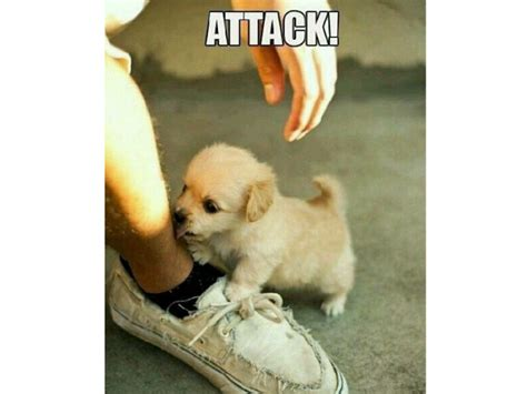 Cute Baby Animal Memes - adorable puppy memes dog memes dog and funny puppy memes