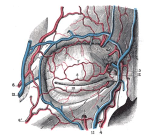 anatomia de latarjet ruiz 4 edicion pdf descargar libros latarjet anatomia humana 4 edicion utorrentwebsites