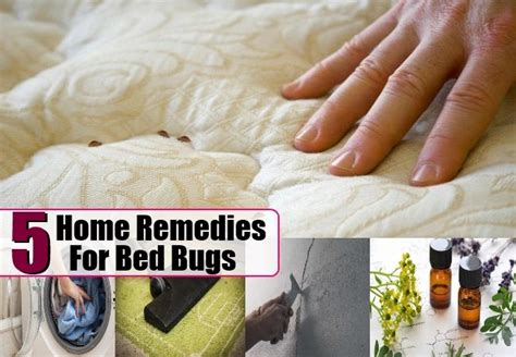 bed bug home remedies bed bugs home remedies natural treatments how to get