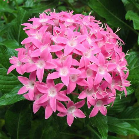 imagenes todo flores plantas que florecen todo el a 241 o