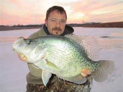 potential record crappie caught  ice fishermen