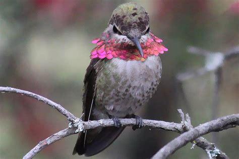 tips to tame angry hummingbirds