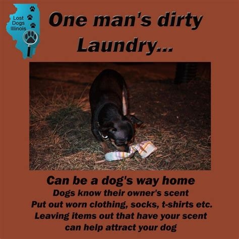 dog scenting in house 29 best images about tips hints to help with lost found dogs on pinterest good samaritan lost