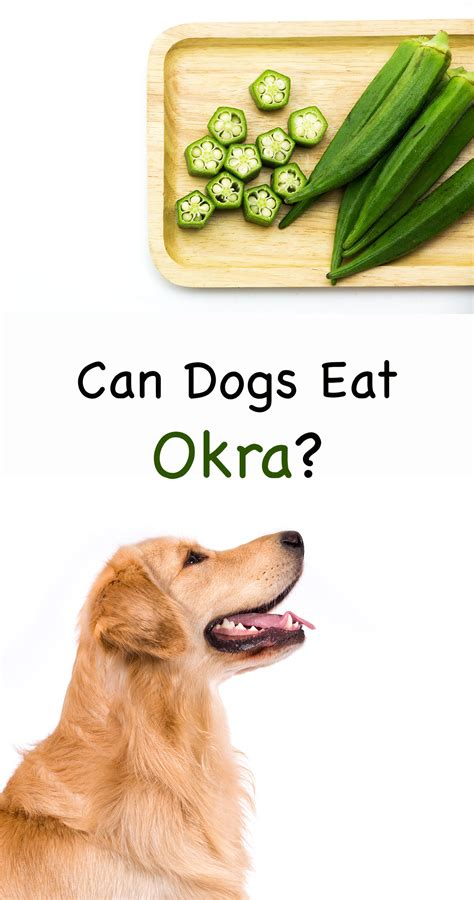can dogs eat okra can dogs eat okra as a treat or even as a meal