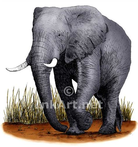 what color are elephants elephant stock illustration