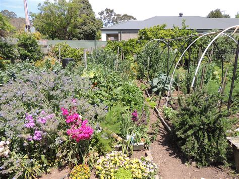 What Is A Community Garden by Fern Avenue Community Gardens Open Day Adelaide