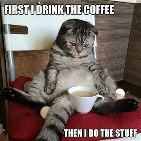 Coffee Memes Funny - best 25 funny coffee ideas on pinterest funny cups