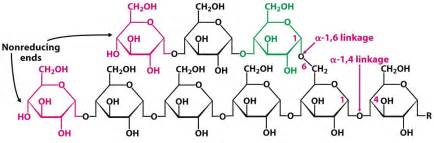 carbohydrates exles diagram of glycogen 28 images glycogen structure