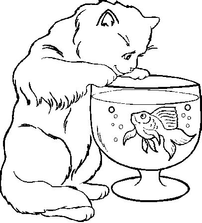 funny cat pics for kids coloring home