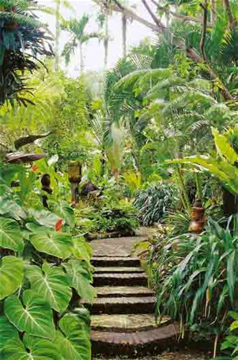 tropical backyard plants bargains and deals jungle patio design