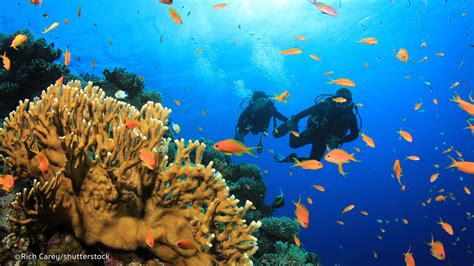 scuba diving phuket scuba diving thailand liveaboards and scuba clubs