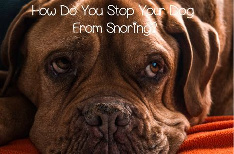 do dogs snore is it possible to stop my from snoring dogvills