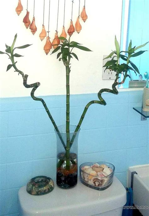 bamboo plant in bathroom 7 secrets for a small bathroom makeover