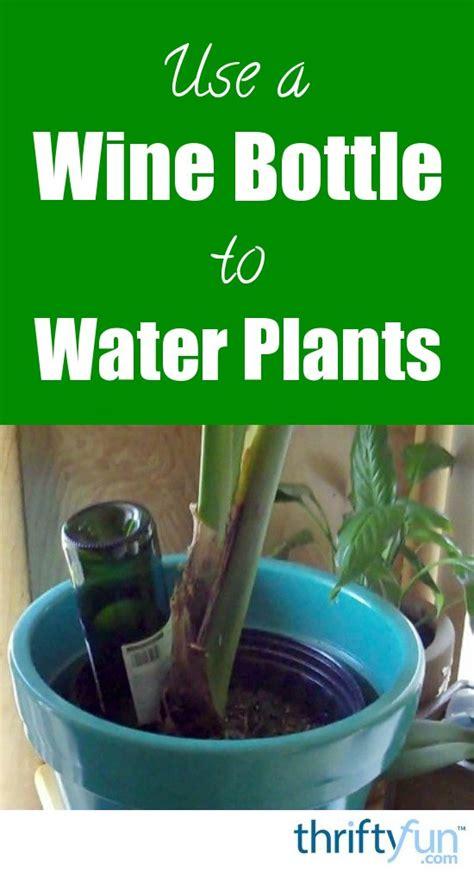 wine bottle  water plants thriftyfun