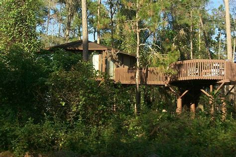 disney saratoga springs resort and treehouse villas treehouse living up close and personal with the forest