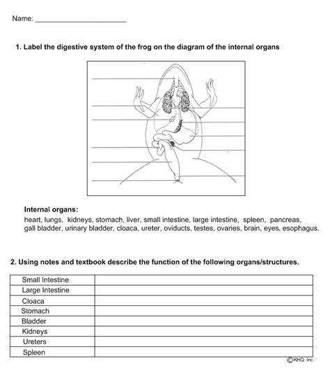 Frog Dissection Worksheet Answer Key by Frog Anatomy Worksheet Lesupercoin Printables Worksheets